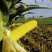 OGM: Enfin la clause de sauvegarde ogm